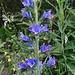 ... wie auch diese prächtige blaue Blumenform