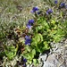 kleine, doch hübsche Blüten ...