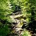 Der Weg führt glücklicherweise durch Wälder