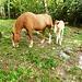 Glückliche Pferde bei Monda