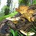 noch ein Detail aus diesem Wunderwald