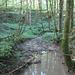 Wildromantischer Neuenkircher Wald.