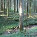Neuenkircher Wald.