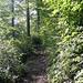Aufstieg durch Wald