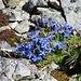 flora in alta quota