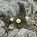fioritura a quasi tremila metri di quota