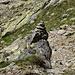 Der Aufstieg zum Jörihorn ist nicht markiert, darum hab ich im Aufstieg ein zusätzliches Steinmannli aufgestellt. Gerade als ich mich im Abstieg nach dem einfachsten Weg umschaute, erblickte ich es wieder. :-)