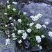auch heute wieder von mit vielen Bergblumen begleitet