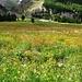 Herrliche vielfältige Blumenwiese im Tal