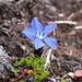 Blütenpracht im Steinmeer