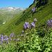Die Rotbühelspitze über dem Wintertal