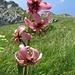 eine weitere grossartige Blume ...