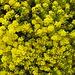 Flowerpower - Frühlingszauber