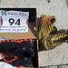 Premio Finisher: scarpe da trail Haglofs