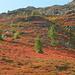 ein Roter Teppich ist ausgelegt hinauf zum Niwen