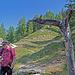 Wegweiser bei Obere Schwarze Wald. Ab hier suchen wir weglos den weiteren Verlauf der Gsponeri