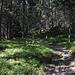 il bosco della Multa