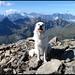 """Auf dem Gipfel vom Mittaghorn. Für alle, die der Hundesprache nicht mächtig sind: Dunja sagt hier <b>""""I did it!"""".</b>"""