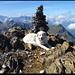 Gipfel Vorder Griessstock, Dunja und Gipfelpanorama.