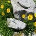 Noch zu definieren - auf dem Geröll leben die verschiedensten Blumen