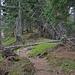 Urige Vegetation auf dem Schlierengrat