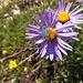 Insekten und Blumen