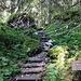 Weg durch den Stillwasserwald.