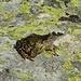 ... und einmal von vorne: der Frosch weiss zu posieren ... ;-))