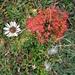 kunstvolle Herbstpräsentation