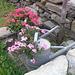 Vasi di fiori originali!