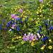 Générosité du printemps alpin