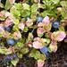 Aufstieg zur Capanna Soveltra - reife Heidelbeeren versäumen