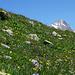 Blumenwiese<br />... und wieder dieser Berg :-)