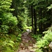 Der tolle Naturweg hinauf nach Gspon