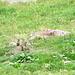 die Pelzknäuel sind so süss - und die Kleinen insbesonders