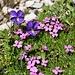 ...ganz und gar nicht! Auch für diesen Boden gibt es die passende Flora. Ich tippe auf Leimkraut und Veilchen.