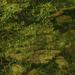 Kein Bild für den ersten Blick: Gespiegelte Frühlingsblätter auf dunkelgrünem Seegrund (Foto [U sglider])