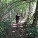 Im Unterholz am Nordufer des Mindelsees