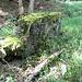 Moosstein: gleich oberhalb des Felsblocks - auch er hilft bei der Orientierung im nicht ganz einfachen Gelände.
