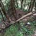 Der Blick zurück vom Querpfad auf die letzten Meter des Aufstiegs, beziehungsweise der Einstieg, wenn man den Glecksteinpfad für den Abstieg benützen will.