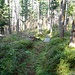 Weg Richtung Bögliegg, überall Heidelbeerstauden
