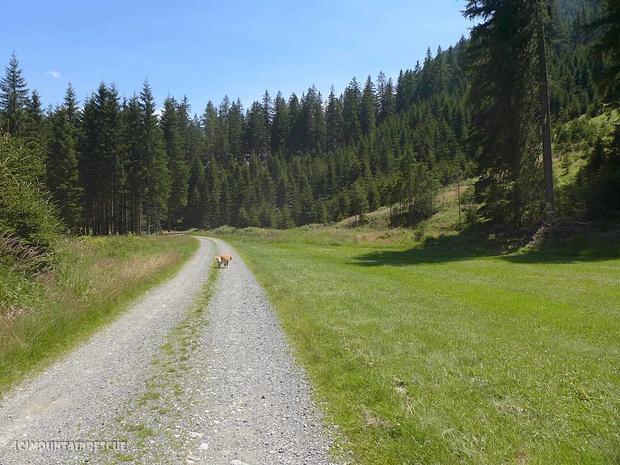 Endloser Forststraßenhatscher zurück zum Ingeringsee