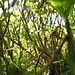 """Im """"Heidelbeer-Dschungel"""""""