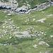 Die Schafherden im Val Roda