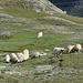 da laufen ganze viele warme Wollpullover