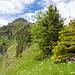 Weiter dem Grat entlang zum Arblihorn