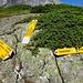 Oberhorn - Wegweiser auf dem Fels befestigt