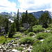 Wir erreichen wieder die Baumgrenze so bei 3400 m Seehöhe