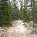 Zunächst durch lichten Wald