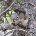 Zetert fürchterlich, als wir an seinem Baum vorbei kommen. Vielleicht hat er Angst vor dem Gewitter?